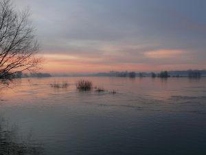 Morgenerwachen an der Elbe